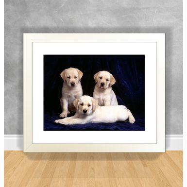 Cachorro-08-Branca
