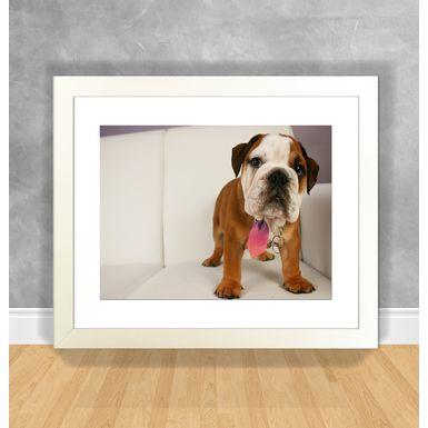 Cachorro-14-Branca