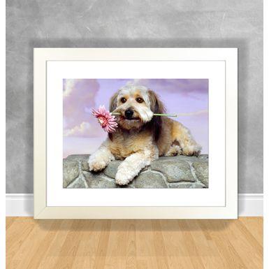 Cachorro-26-Branca