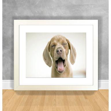 Cachorro-27-Branca