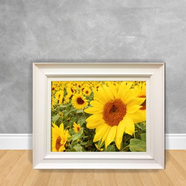 Quadro-Decorativo-Canvas-Girassol