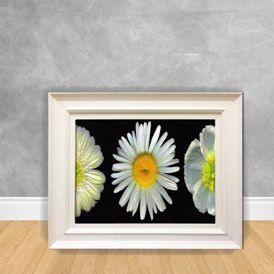 Quadro-Decorativo-Canvas-Flor-Margarida-Branca