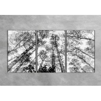 Quadro-Impressao-em-Vidro---Arvores-Grandes-3-partes-40x60-